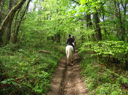 riding holidays forest